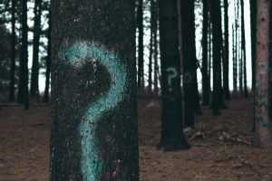 A tree, in a forest, with a question mark painted on it.
